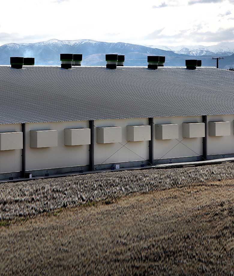 Cold storage building design and construction in New Zealand